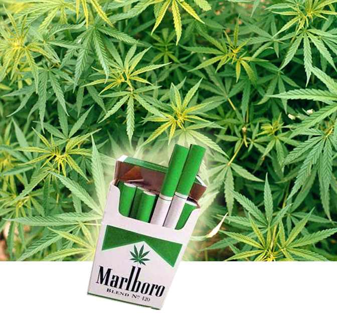Marijuana cigarettes marketing